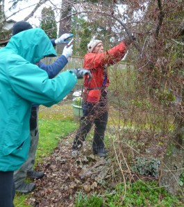 Students from the Clematis Pruning Workshop
