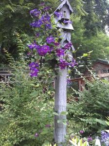 Clematis Adorning a Birdhouse