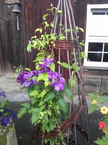 Clematis on a Tripod Made of Natural Materials
