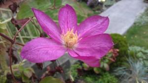 A Luscious Last Blossom of C. Asao