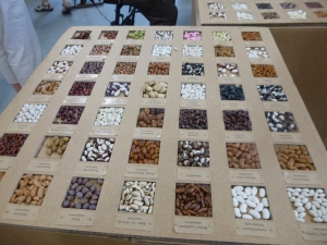 A Display of Heirloom Beans