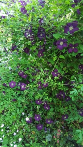 C. Etoile Violette           East Side